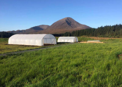 The Green Growers Polytunnels