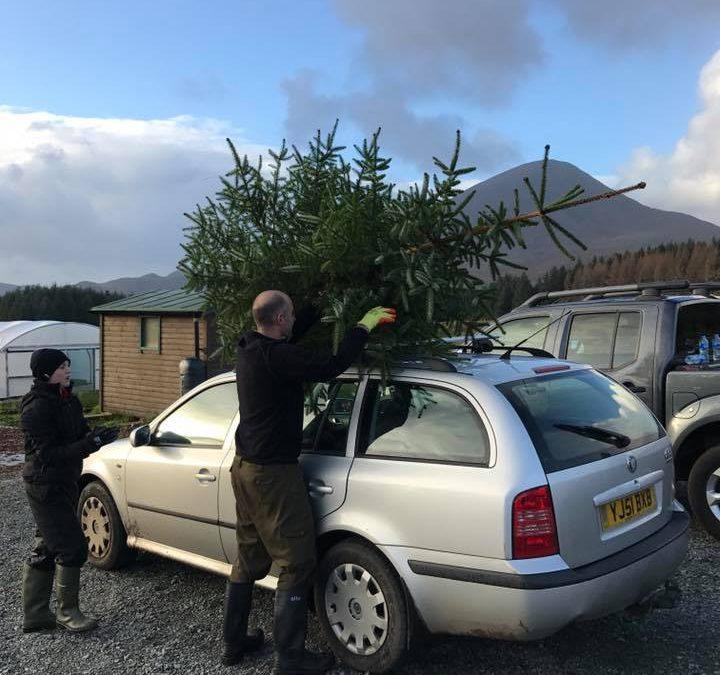 Christmas Tree Day