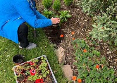 Planting our annuals produce from the Hub Tunnel