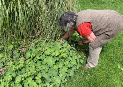 Tony busy weeding