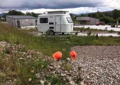 Wild Flowers in amongst the Campers